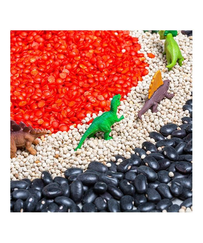 Bouteille sensorielle - Observation - Dinosaures