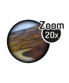 Microscope Binoculaire 3D